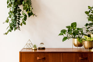 Creative and Thoughtful Plant Styling Tips