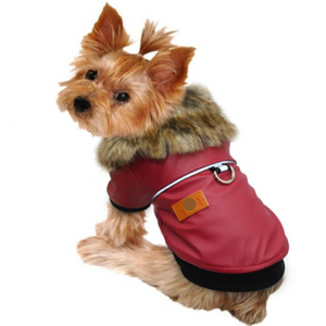 A Dog Wearing The Fur Collared Red Leather Dog Jacket