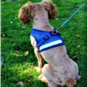 A Dog Showing The Back Of The Blue Reflective Dog Mesh Harness