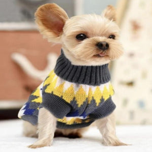 Dog wearing a stretchy dog sweater that has a pretty jagged multicolored design of gray, white, yellow, and blue alternately.