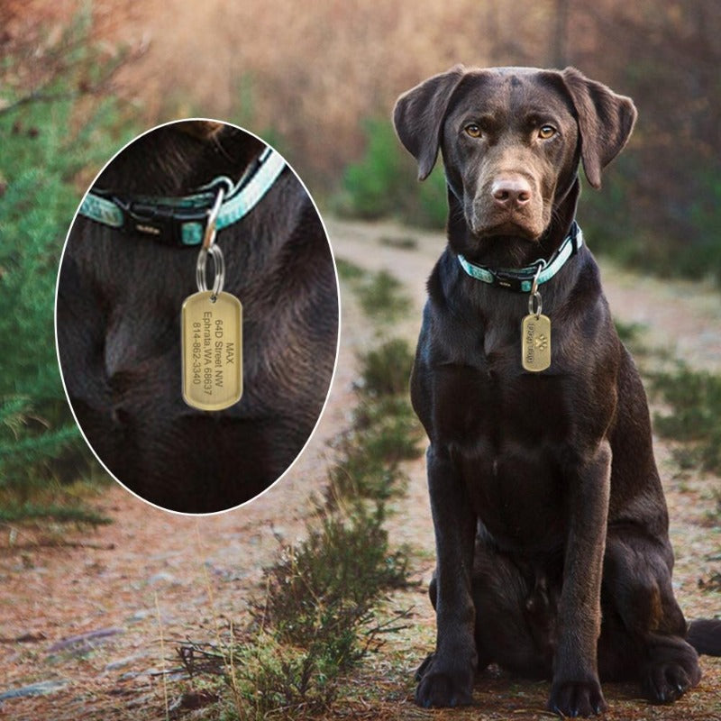 A Dog Wearing A Solid Metal Military Style Bronze Dog Tag