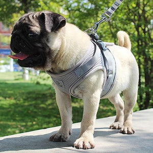 A Dog Wearing A Gray Reflective Dog Mesh Harness