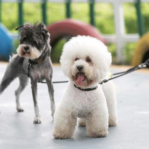 2 Dogs On A Toggy Doggy Black Dual Dog Leash