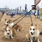Load image into Gallery viewer, 3 Dogs On A Detachable Triple Dog Leash