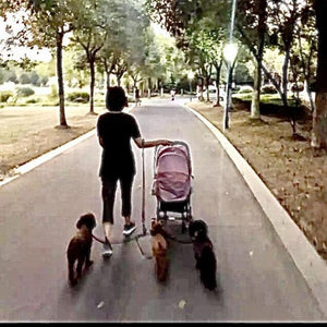 A Woman With a Baby Stroller and 3 Dogs on a Detachable Triple Dog Leash