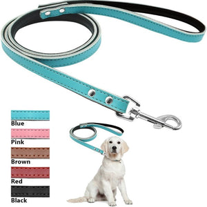 A Dog Wearing A Toggy Doggy Blue Leather Dog leash