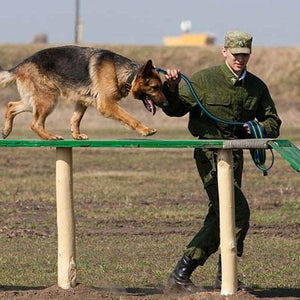 A Soldier Training A Dog With The Blue-Green Long Training Dog Leash