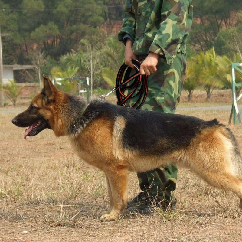 A Soldier Training A Dog With The Black-Orange  Long Training Dog Leash