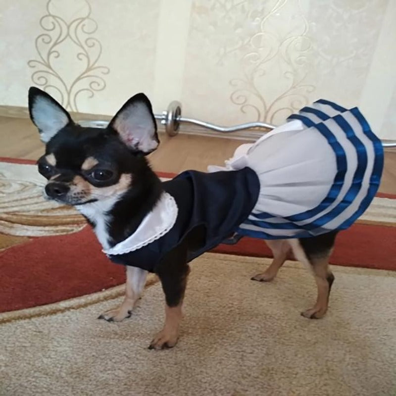 A Dog Wearing A Blue Sailor Dog Dress