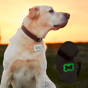 A Dog Wearing A Bone Shape Personalized Engraved Glowing Stainless Steel Dog Tag