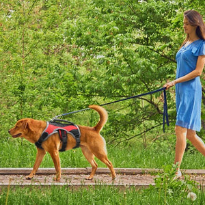A Woman Walking A Dog Wearing A Toggy Doggy Red Reflective Training Dog Vest Harness On A Leash