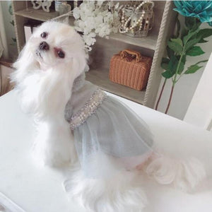 A Dog Wearing A Pearl Embellished Dog Dress, Blue
