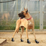 Load image into Gallery viewer, A Dog Wearing The Rubber Doggy Socks