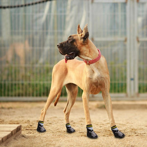A Dog Wearing The Rubber Doggy Socks