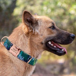 Load image into Gallery viewer, A Dog Wearing A Blue-Green Nylon Customized Engraved Tag Collar with Metal Buckle and D-Ring