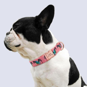 A dog wearing a Pink Nylon Customized Engraved Tag Collar with Metal Buckle and D-Ring
