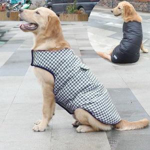 A Dog Wearing A Blue Reversible Plaid Dog Vest