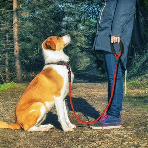 A Man Walking A Dog On A  Red Reflective Long Dog Leash
