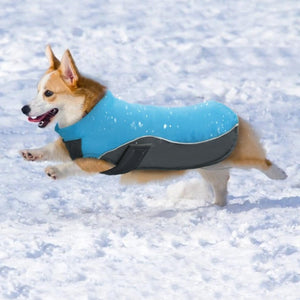 A Dog Wearing The Blue Warm Reflective Dog Vest