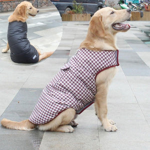A Dog Wearing A Red Reversible Plaid Dog Vest