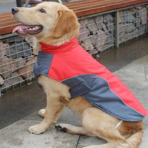 A Dog Wearing The Red Warm Reflective Dog Vest