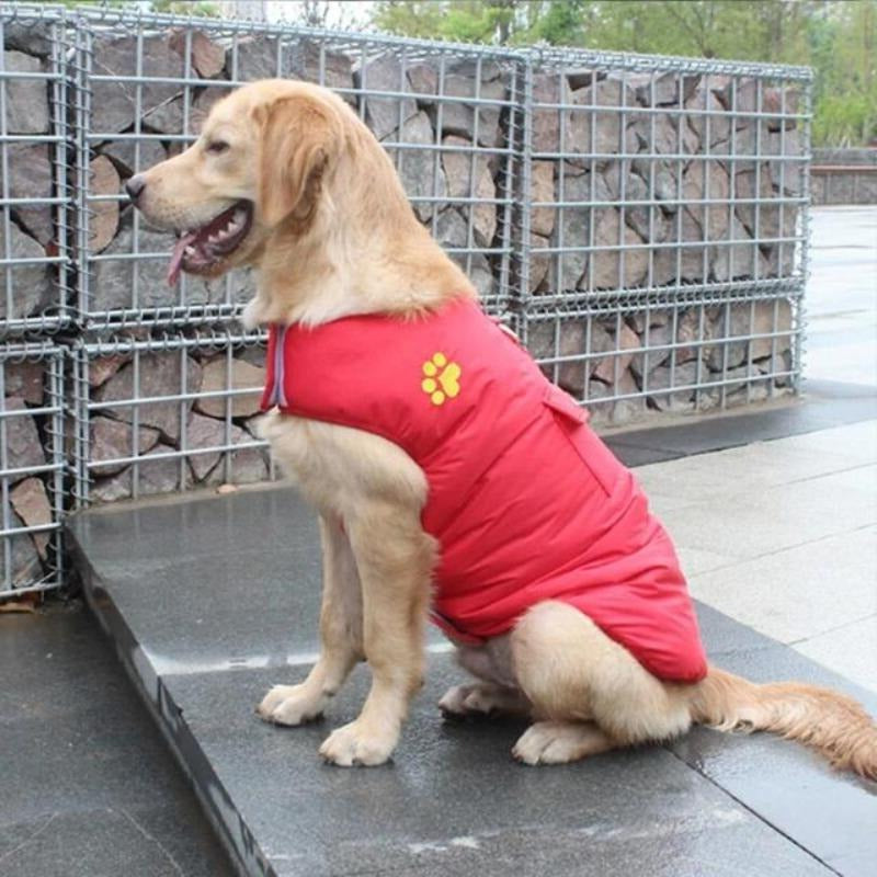 A Dog Wearing The Red Double Sided Dog Vest
