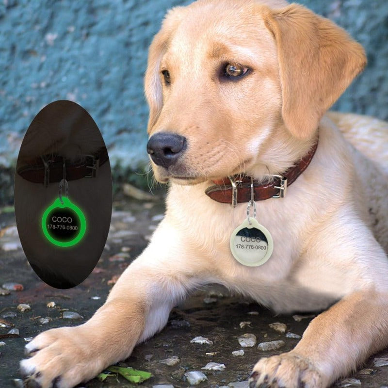 A Dog Wearing A Round Shape Personalized Engraved Glowing Stainless Steel Dog Tag