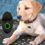 Load image into Gallery viewer, A Dog Wearing A Round Shape Personalized Engraved Glowing Stainless Steel Dog Tag