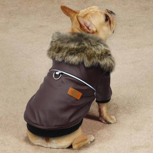 A Dog Wearing The Fur Collared Brown Leather Dog Jacket