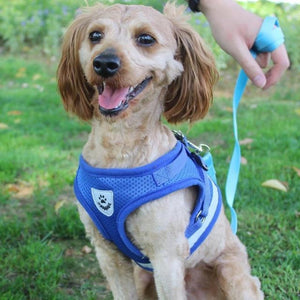 A Dog Wearing A Blue Reflective Dog Mesh Harness