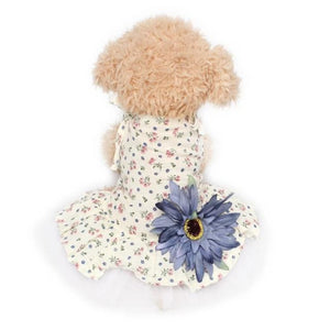 A small brown doggy wearing the Blue Big Flower Dress with a pretty floral fabric design and a big blue flower at the back