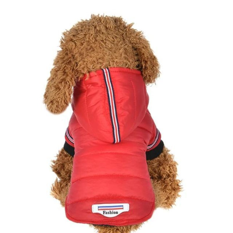 A Dog Wearing the Red Outdoor Hoodie Jacket