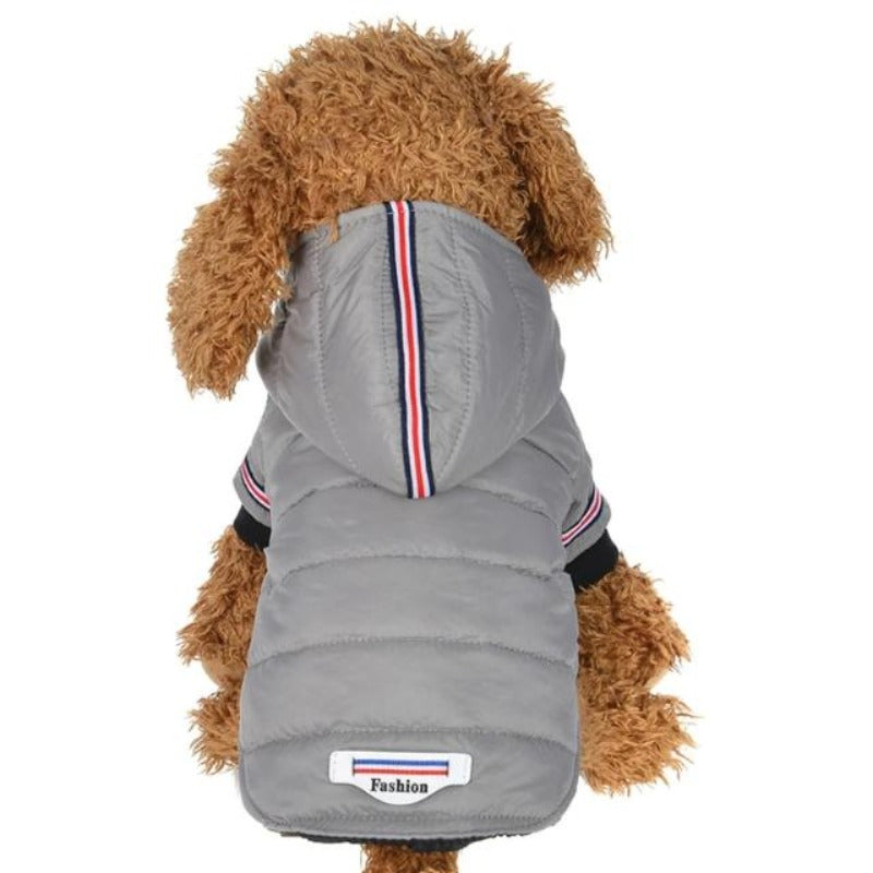 A Dog Wearing The  Gray Outdoor Hoodie Jacket