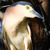 Nankeen Night-Heron