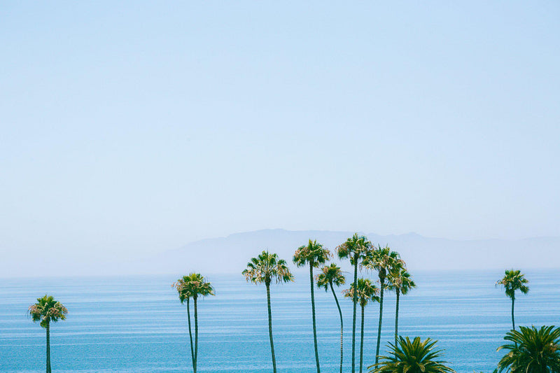 Santa Barbara Coast Palms
