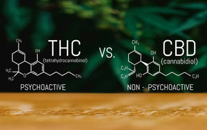 CBD VS THC: What Are The Differences Between The Effects And Benefits