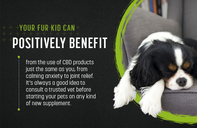 your fur kid can positively benefit from cbd
