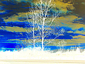 Greeting card - Trees - GTA corridor - Horizontal - 5 x 7