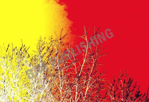 Greeting card - Trees - 5 x 7