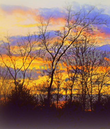 Greeting card - Trees - sunset along the 401 - Vertical
