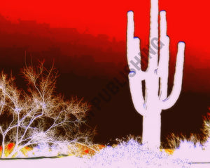 Photo Print Cacti - Phoenix