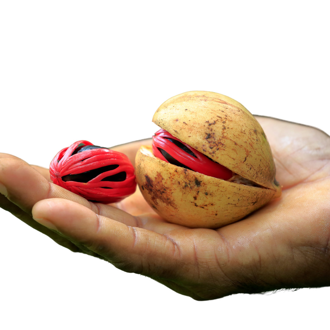 Can Nutmeg essential oil be used safely?