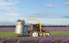 New Zealand Lavender French Harvester