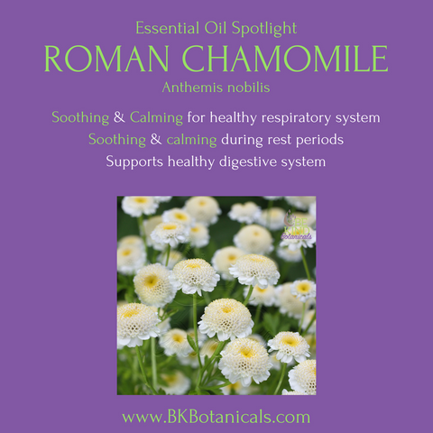 Roman Chamomile Essential Oil - Be Kind Botanicals