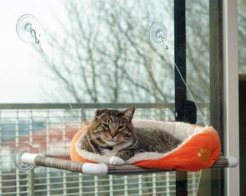 Window Hammock Bed