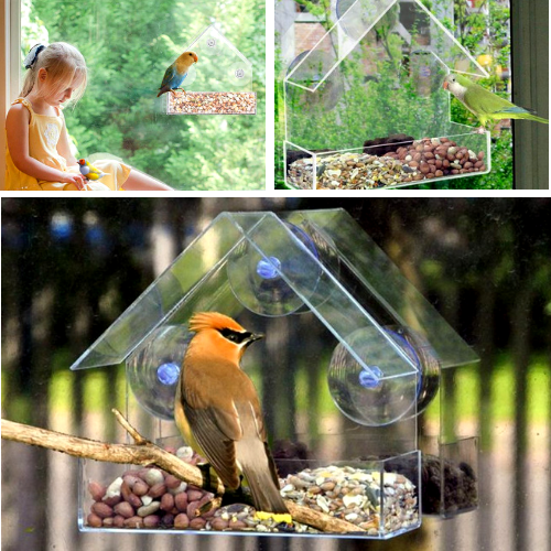 The Best Clear Bird Feeder