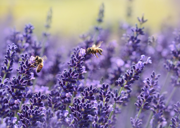 Bee Products: Propolis vs Royal jelly, Beeswax, and Pollen - Do You Know the Difference?