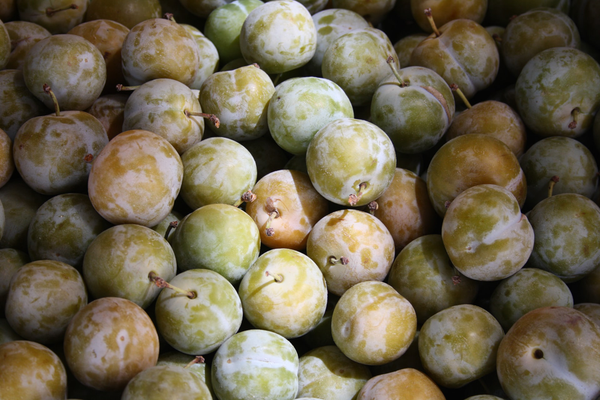 The Amazing Health Benefits of Nature's Glory Plum Balls