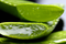 The Real Deal Behind Aloe Vera: Its History, What It's Known for, and Its Benefits
