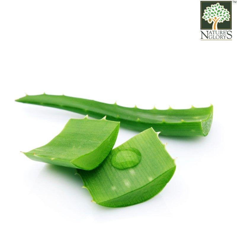 Aloe Vera Leaf Cut-Up